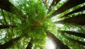 sustainable british forests